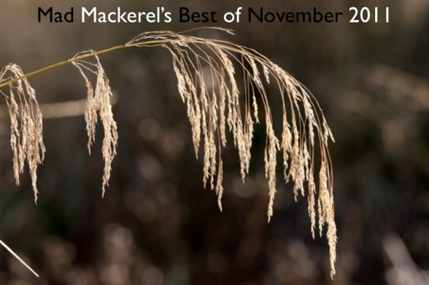 Mad Mackerel's Best Of The Month: November 2011.