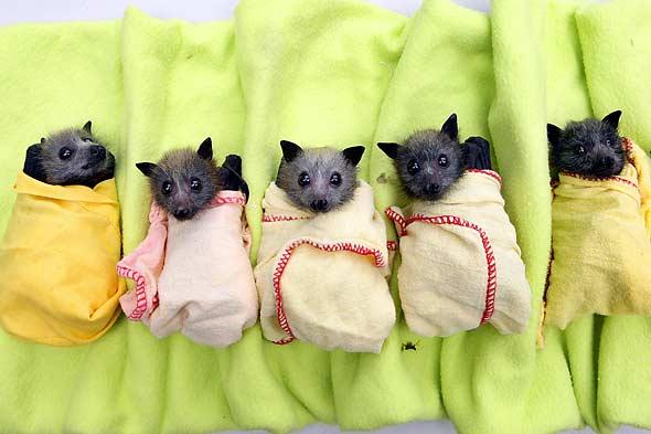 Bats Pajamas Ready New Album.