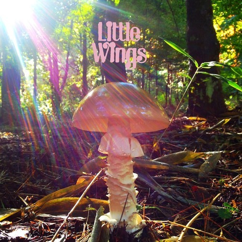 New Album From Little Wings