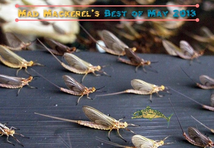 Mad Mackerel's Best Of The Month: May 2013