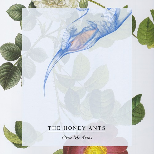 Introducing >>> Honey Ants