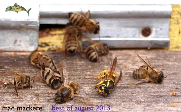 Mad Mackerel's Best of August 2013