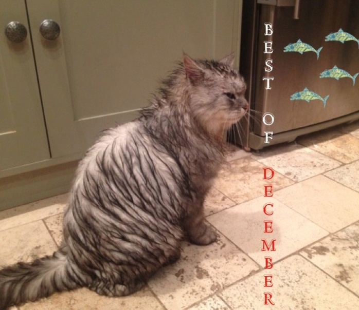 Mad Mackerel's Best of December downloads 2013