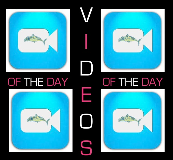 Videos of the Day