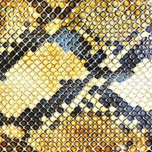 amazing snakeheads